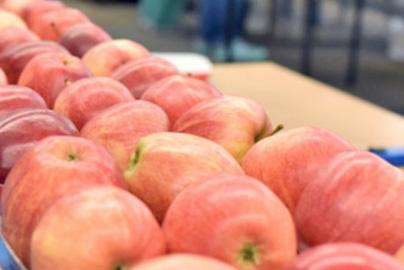 Przetwórnie owocowo warzywne